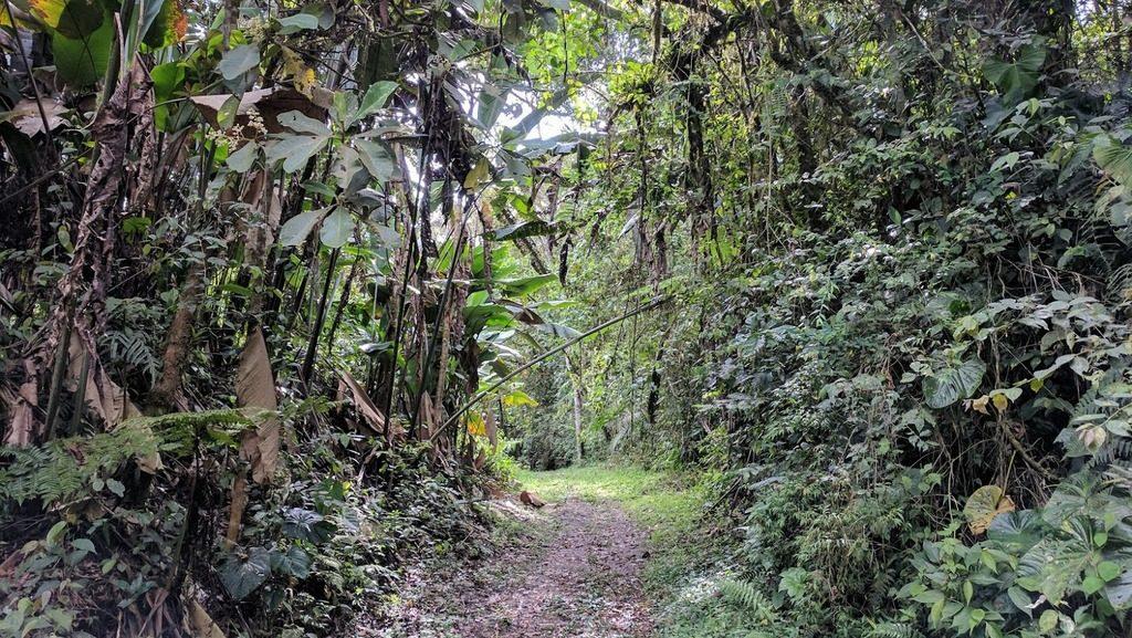 Maquipucuna cloud forest