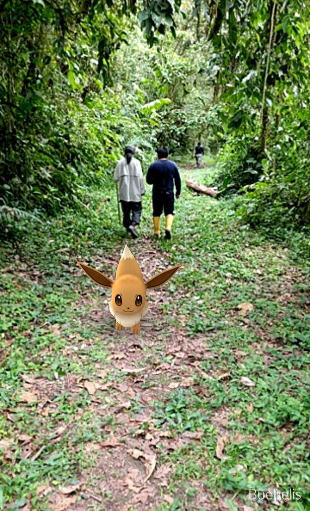 Pokemons at Maquipucuna cloud forest